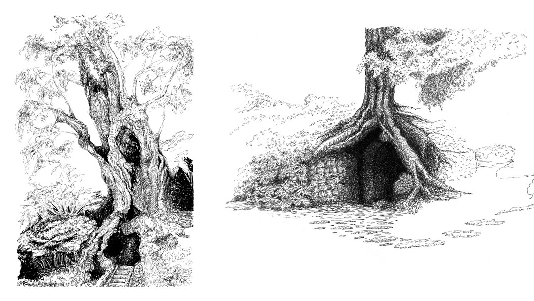 Tree explorations with pen